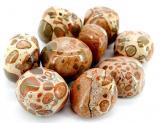 Jaspe léopard pierres roulées 250g