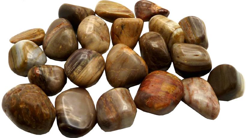 Bois fossile pierres roulées 250g